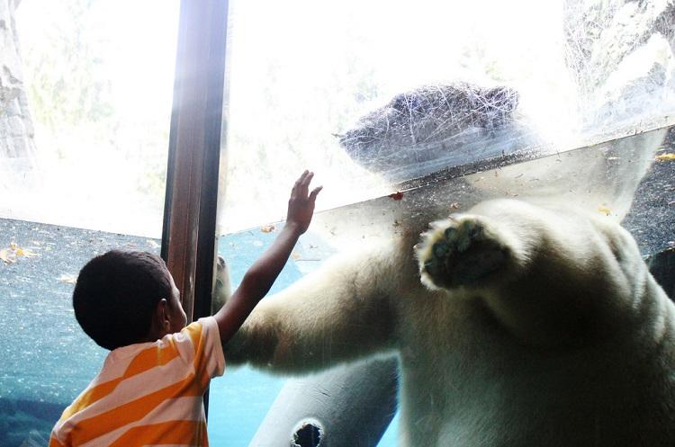 Nova York com crianças zoo NY