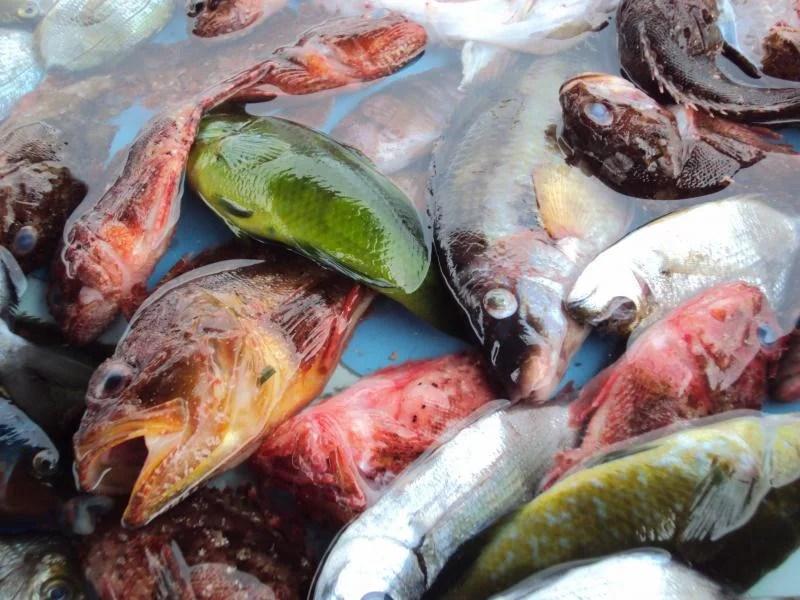 Peixes no mercado
