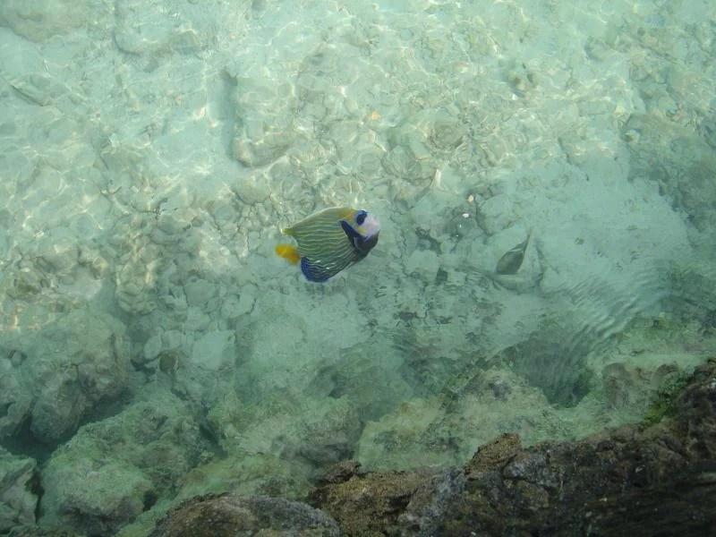 peixes-maldivas