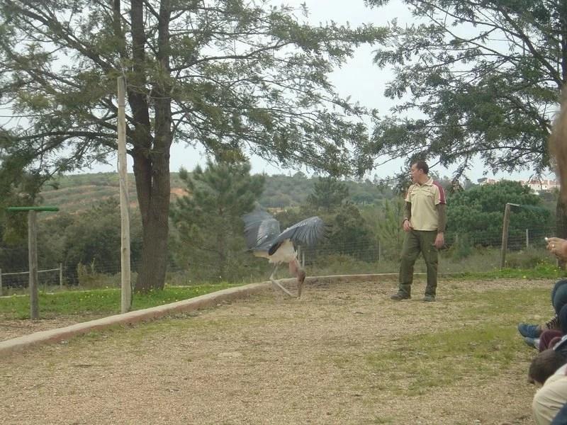 Demonstração de Aves de Rapina no Badoca Park