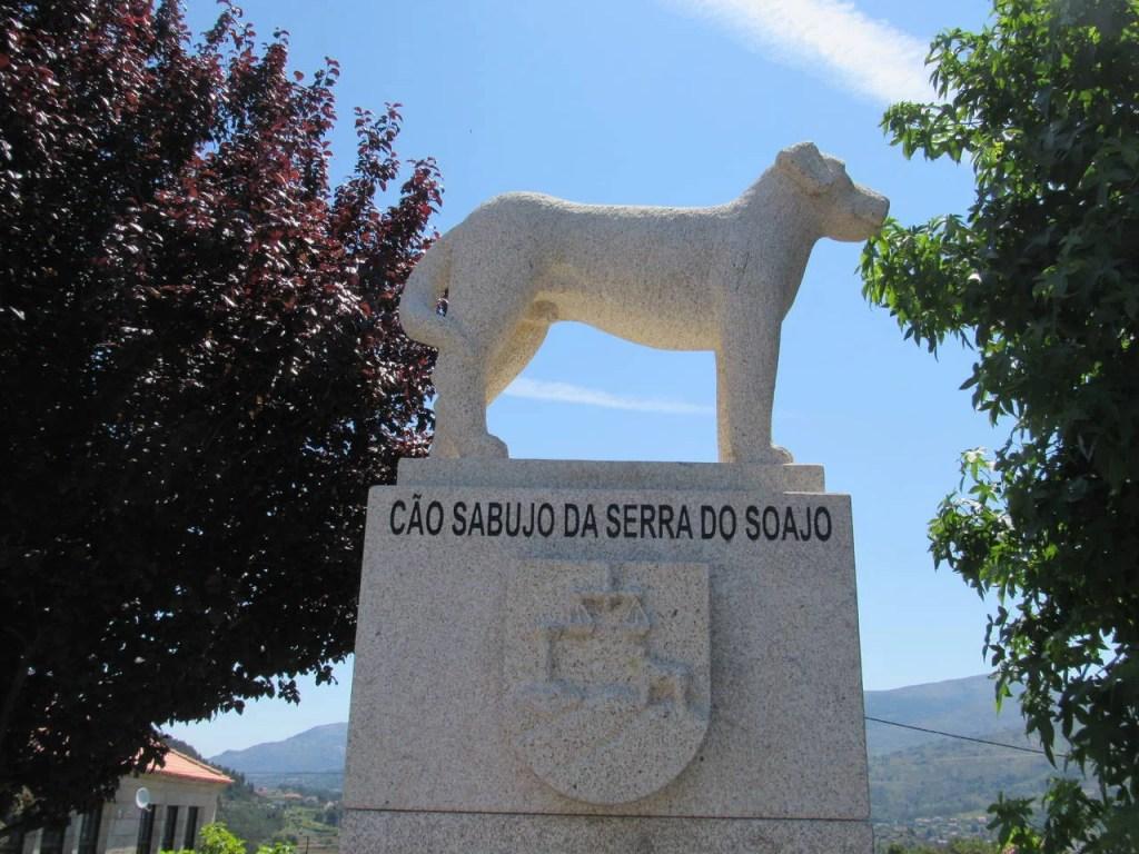Cão Sabujo da Serra do Soajo.