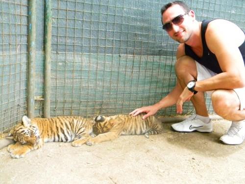 Filhotes de Tigre