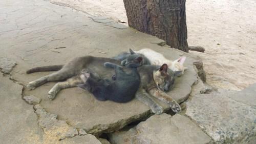 Gatinhos no Zoo dopados? Será!