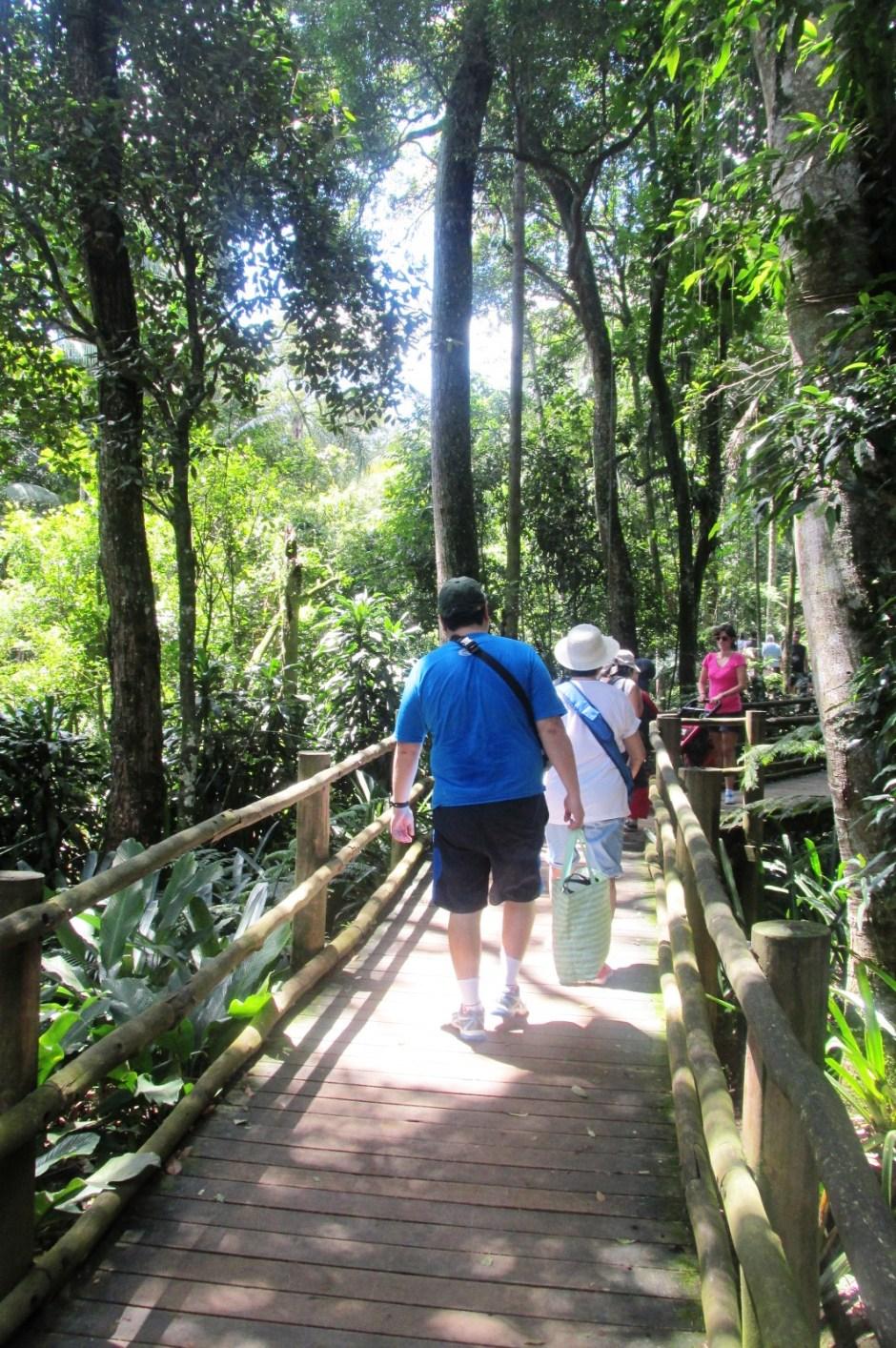 Trilha das nascentes - Jardim Botânico