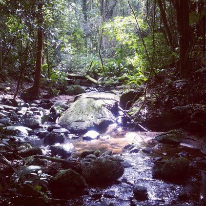 O parque é cheio de riachos - Foto: Patrícia Ribeiro/ Passeios Baratos em SP