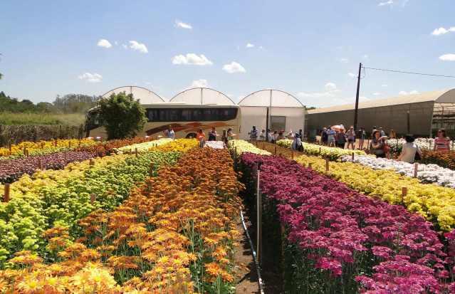 Campo de flores. Foto: Humberto Castro