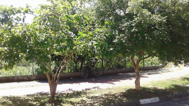 Parada para descansar debaixo das árvores Foto: Cauê Salem