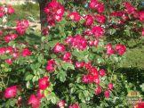 jardim de florença_21
