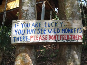 Heed the warnings on Koh Jum