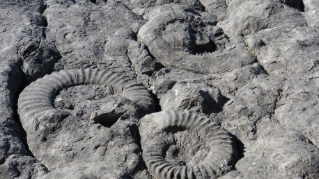 dalle-ammonites-alpes-haute-provence