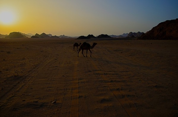 I love this picture of Wadi Rum at dusk when even the camels decide to trudge back