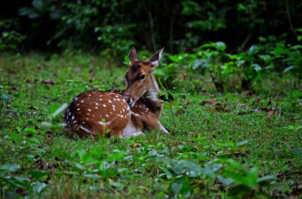 Bandipur and Kabini - They're shy and yet bold enough