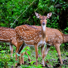 To those who look through the spotted deer