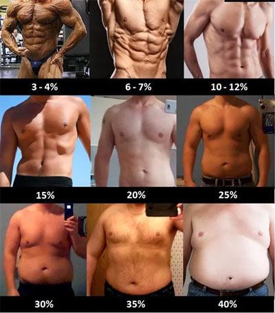 pourcentage masse grasse