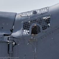 Birds on the USS Yorktown (CV-10)