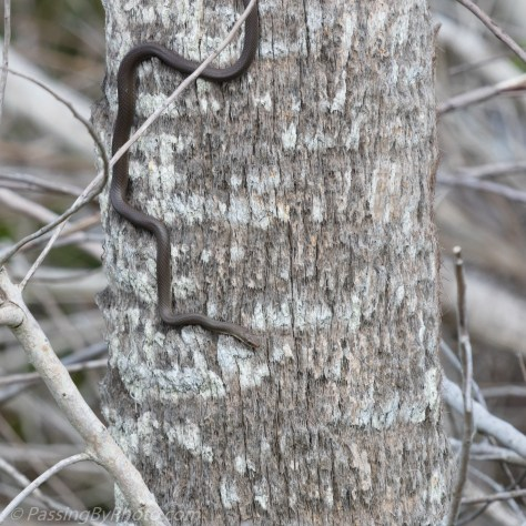 Brown Snake on Palm Tree Trunk