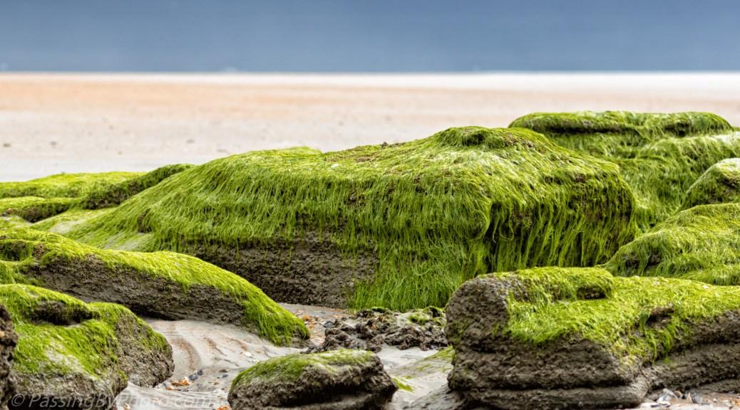 Green Rocks at the Beach