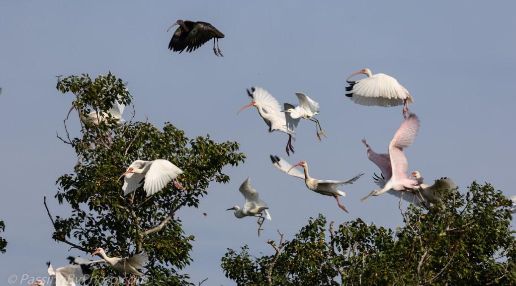 Tree Full of Wading Birds