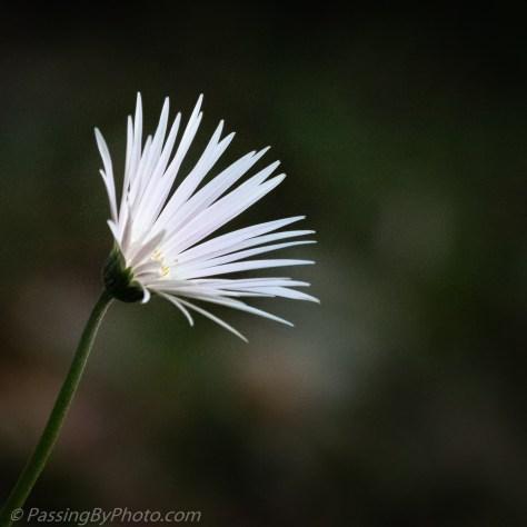 Flower reaching for the sun