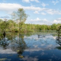 Ravenswood Pond, Puffy Clouds