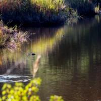 Alligator Landscape