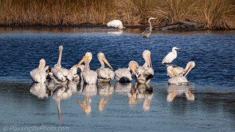Water and Wading Birds in a Pond