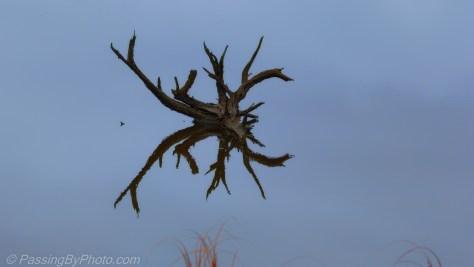 Drift Wood in Pond