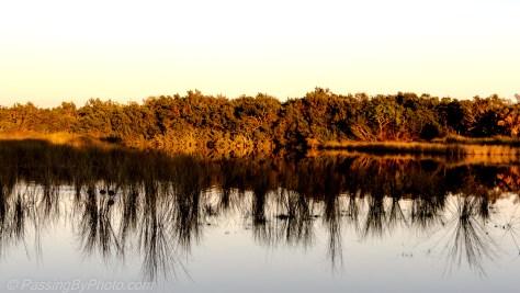 Pond, Sun's Last Rays