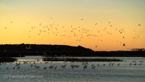 Sunrise and the Birds