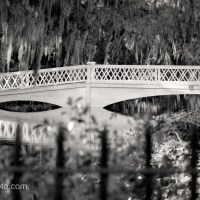Update 5: Long White Bridge, Magnolia Plantation and Gardens