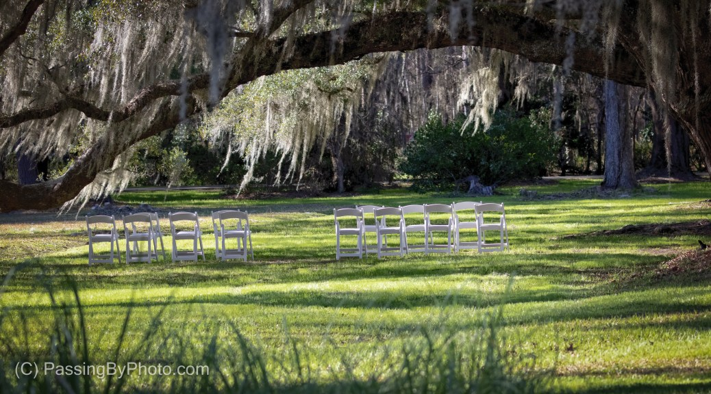 White Chairs Set Up Under Live Oak Tree
