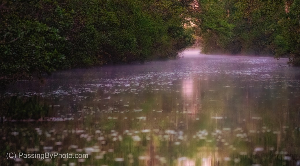 Canal Leading Into Okefenokee Swamp