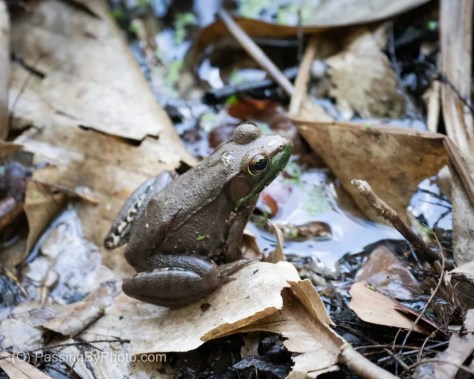 Frog at the Swamp