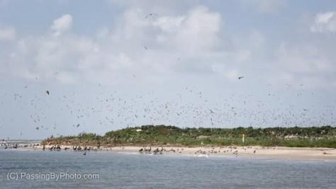 Birds in the Air over Bird Key, Stono