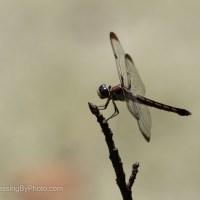 Dragonfly Corner