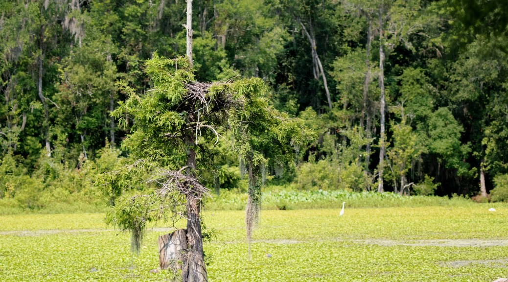 The Skinny Tree, Ravenswood Pond
