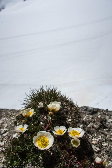 Le monde minéral laisse parfois un peu de place à la flore