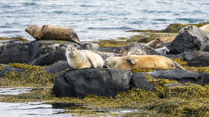 observation des phoques pendant un circuit en Islande