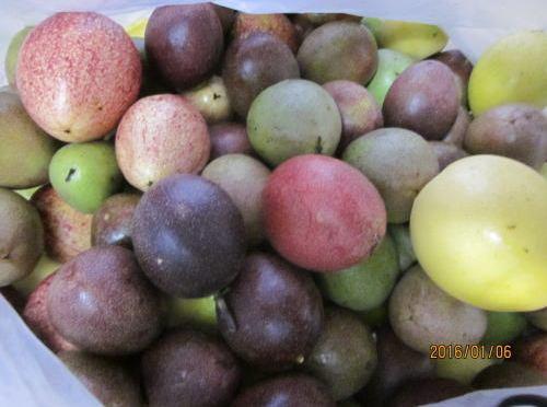 秋結実の果実がようやく色づく