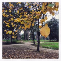 Pistoia : colours of autumn in the park