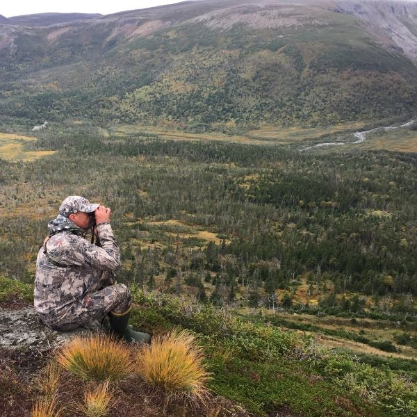 hunting guide scouting moose in newfoundland