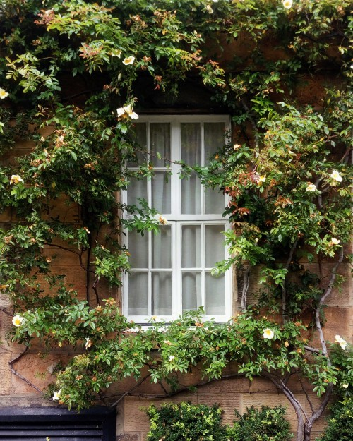 Flowery window in Edinburgh