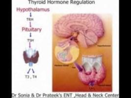 thyroid-regulation-320x200