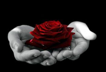 flower-1392312093v9I