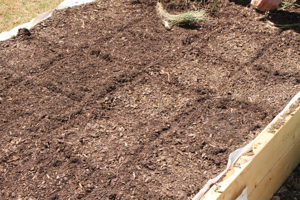 Square Foot Gardening in Raised Bed