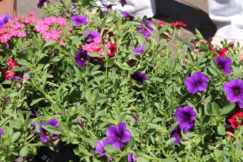 Flower Flats from Nursery