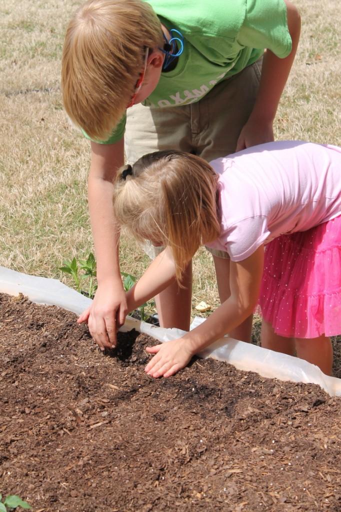 Planting in DIY Raised Bed Garden