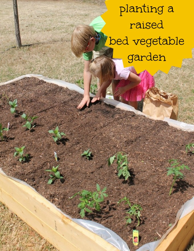 Planting a Raised Garden Bed