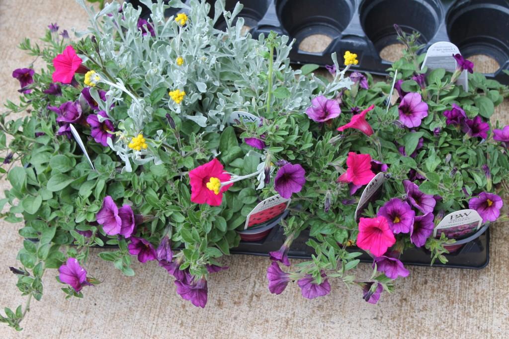 Flowers for DIY Hanging Baskets