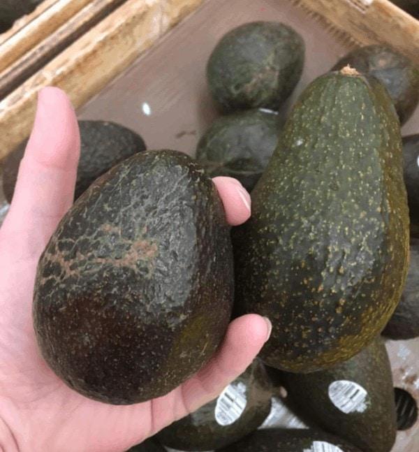 Avocado in Hand